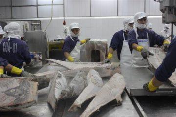 Chế biến thủy sản xuất khẩu tại Công ty CP Thủy sản Bình Định.